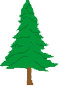 pinetree2 copy